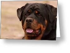 Portrait Of A Rottweiler Greeting Card by Nikki Stetson
