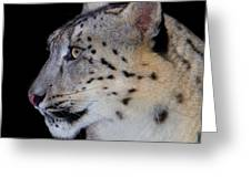 Portrait Of A Snow Leopard Greeting Card by John Absher