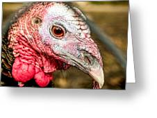 Portrait Of A Turkey Greeting Card by Jim DeLillo