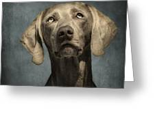 Portrait Of A Weimaraner Dog Greeting Card by Wolf Shadow  Photography