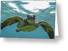 Posing Sea Turtle Greeting Card by Brad Scott