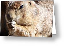 Prairie Dog Greeting Card by David G Paul