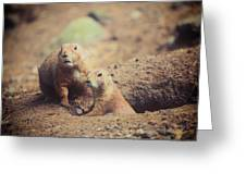 Prairie Dogs Greeting Card by Karol  Livote