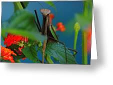 Praying Mantis Greeting Card by Raymond Salani III