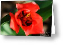 Pre-pollination  Greeting Card by Neal  Eslinger