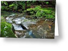 Pretty Green Creek Greeting Card by Kaye Menner