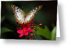 Pretty Little Butterfly  Greeting Card by Saija  Lehtonen