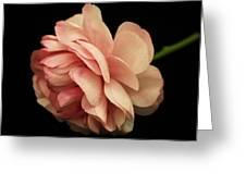 Pretty Pink Flower Greeting Card by Carol Welsh