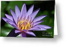 Pretty Purple Petals Greeting Card by Sabrina L Ryan