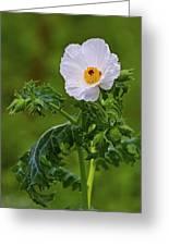 Prickly Poppy Greeting Card by Gary Holmes