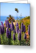 Pride Of Madeira Flowers In Orange County California Greeting Card by Paul Velgos
