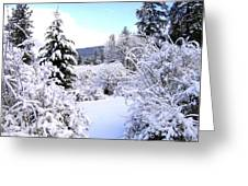 Pristine Winter Trail Greeting Card by Will Borden