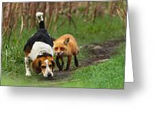 Probably The World's Worst Hunting Dog Greeting Card by Mircea Costina Photography