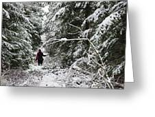 Protective Forest In Winter With Snow Covered Conifer Trees Greeting Card by Matthias Hauser
