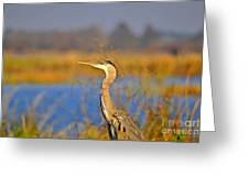 Proud Profile Greeting Card by Al Powell Photography USA