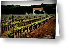 Provence Vineyard Greeting Card by Lainie Wrightson