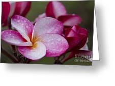 Pua Melia Floral Celebration Greeting Card by Sharon Mau