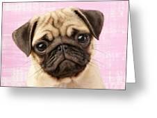 Pug Portrait Greeting Card by Greg Cuddiford