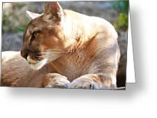 Puma 3 Greeting Card by DiDi Higginbotham