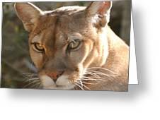 Puma Closeup Greeting Card by DiDi Higginbotham