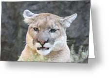 Puma Head Shot Greeting Card by JOHN TELFER