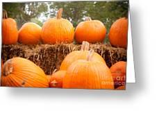 Pumpkin Fest Greeting Card by Sonja Quintero