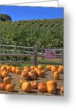 Pumpkins On The Farm Greeting Card by Joann Vitali