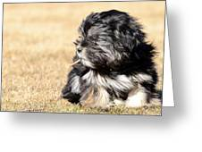 Puppie With A Stick Greeting Card by Toppart Sweden