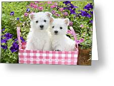 Puppies In A Pink Basket Greeting Card by Greg Cuddiford