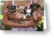 Puppies In Maria's Arms Greeting Card by John Lautermilch