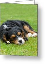 Puppy Asleep With Garden Daisy Greeting Card by Natalie Kinnear