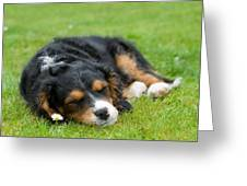 Puppy Asleep With Garden Daisy Greeting Card by Natalie Kinnear