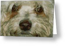 Puppy Eyes Greeting Card by Ernie Echols