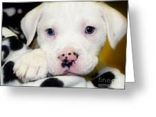 Puppy Pose With 4 Spots On Nose Greeting Card by Peggy  Franz