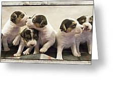 Puppy Row Greeting Card by Stacy Lynne Photography