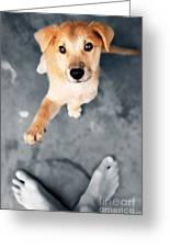 Puppy Saluting Greeting Card by William Voon