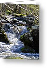 Pure Mountain Stream Greeting Card by Bill Cannon