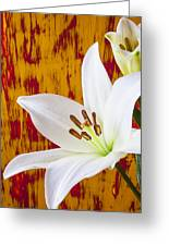 Pure White Lily Greeting Card by Garry Gay