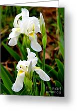 Purity In Pairs Greeting Card by Kathy  White