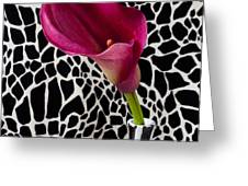 Purple calla lily Greeting Card by Garry Gay