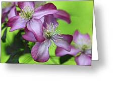 Purple Clematis Greeting Card by Sylvia Cook