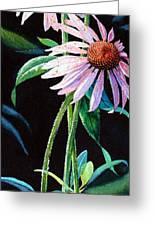 Purple Cone Flower 2 Greeting Card by Hanne Lore Koehler