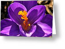 Purple Crocus Detail Greeting Card by Chris Berry