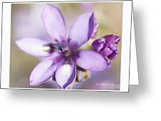 Purple Geranium 2 Greeting Card by Artist and Photographer Laura Wrede