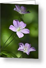 Purple Geranium Flowers Greeting Card by Christina Rollo