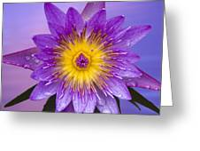 Purple Greeting Card by Heiko Koehrer-Wagner