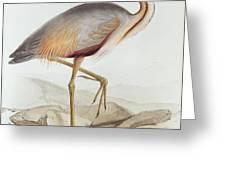 Purple Heron Greeting Card by Edward Lear