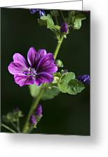 Purple Hollyhock Flowers Greeting Card by Christina Rollo