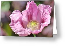 Purple Iceland Poppy Greeting Card by Suzanne Gaff