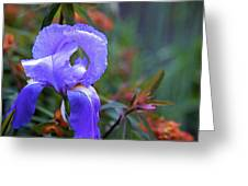 Purple Iris Greeting Card by Terry Horstman